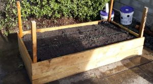 Raised garden laid out for one foot (300mm) square garden